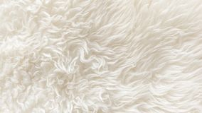 White soft wool texture background, seamless cotton wool, light natural sheep wool, close-up texture of white fluffy fur, wool wit. H beige tone for designer Stock Photo
