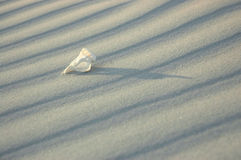 White solitude 2. Shell series Royalty Free Stock Images
