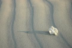 White solitude. Beautiful white spiral shell on white sand - pure nature, untouched world Stock Photos