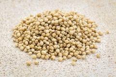 White sorghum grain Stock Photo