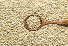 White Sorghum grain with a spoon Stock Images