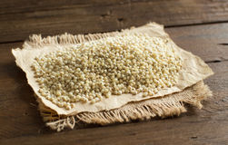 White sorghum grain Royalty Free Stock Photography