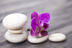 White spa stones and oriental flower. Spa still life with purple orchid and white zen stones. Wellness concept Stock Images