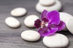 White spa stones and oriental flower. Spa still life with purple orchid and white zen stones. Wellness concept Royalty Free Stock Photography
