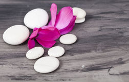 White spa stones and oriental flowes. Spa still life with purple flower and white zen stones. Wellness concept Stock Photo
