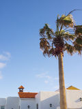 White spanish houses with palm tree Royalty Free Stock Image