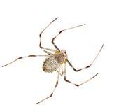 White spider Stock Photos