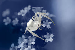 White spider Royalty Free Stock Photography