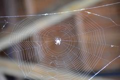 Oh what a tangled web we weave royalty free stock image