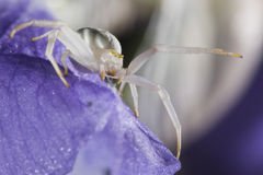 White spider on leaf Stock Photography
