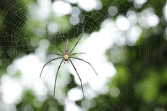 White spider wait with woven web spider Stock Photo
