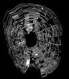 White spider web. On a black background Stock Photo
