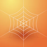 White spider web Stock Images