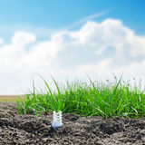 White spiral eco bulb on desert with green grass Stock Images