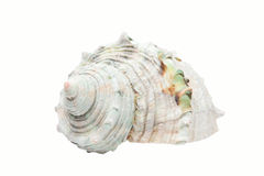 White spiral shell Royalty Free Stock Photo
