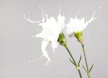 White splash flowers Stock Photos