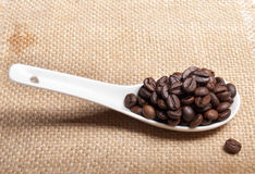 White spoon of coffee beans Stock Image