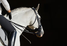 White sport horse with the rider Stock Images