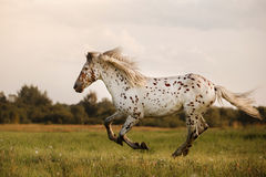 White spot in the horse Stock Photos