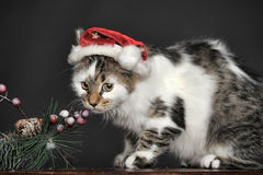 White with spots striped cat in Christmas red hat Royalty Free Stock Photos