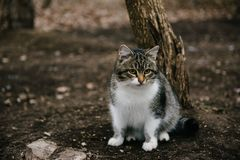 White and brown spotted cat sitting on the street stock photos