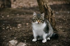 White spotted cat sitting on the street royalty free stock photography