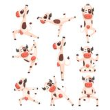 White spotted cow set, farm animal character doing sport exercise vector Illustrations on a white background. White spotted cow set, farm animal character doing Royalty Free Stock Photo