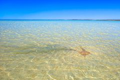 Shell Beach Shark Bay royalty free stock photo