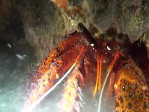 White-spotted hermit crab eating in the night in Indonesia stock footage