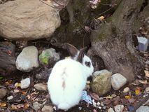 White spotted rabbit on the ground in the forest. Close up stock photos
