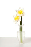 White Spring Daffodil Flower Bunch Stock Photography
