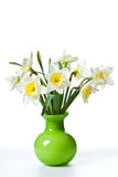 White Spring Daffodil Flower Bunch Royalty Free Stock Photography