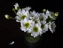 White spring flower. Bouquet of white spring margaret Stock Images