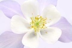 White spring flower closeup Stock Image