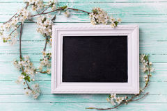 White  spring flowering branches of trees  and empty blackboard Stock Image