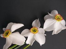 White spring flowers background, or summer royalty free stock photos