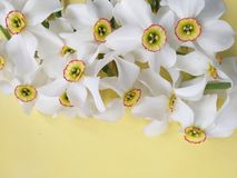 White spring flowers background, or summer royalty free stock photography