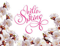 White spring flowers on a branch and text Hello Spring. Calligraphy lettering Royalty Free Stock Photography