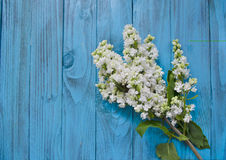 White spring flowers. Lilac flowers on blue wooden vintage background Royalty Free Stock Photo