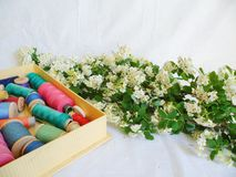 White spring flowers and multi-colored thread for sewing on a white background.  Stock Photos