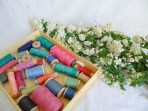 White spring flowers and multi-colored thread for sewing on a white background.  Stock Image