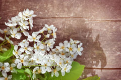 White spring flowers on the old wood Stock Images