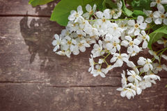 White spring flowers on the old wood Royalty Free Stock Photo
