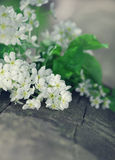 White spring flowers on the old wood Royalty Free Stock Photos