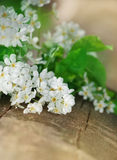 White spring flowers on the old wood Stock Photo