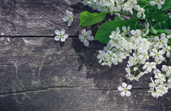 White spring flowers on the old wood Royalty Free Stock Image