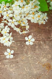White spring flowers on the old wood Stock Photos