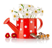 White spring flowers in red vase Stock Photo