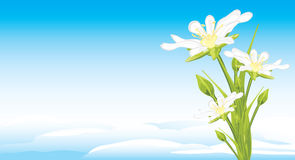 White spring flowers on a skyscape. Illustration Royalty Free Stock Images