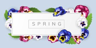 White spring frame with colorful pansy flower and leaf. Realistic vector illustration for spring and nature related design, horizontal banner Royalty Free Stock Image